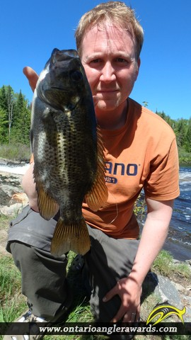 """10.03"""" Rock Bass caught on The South River"""