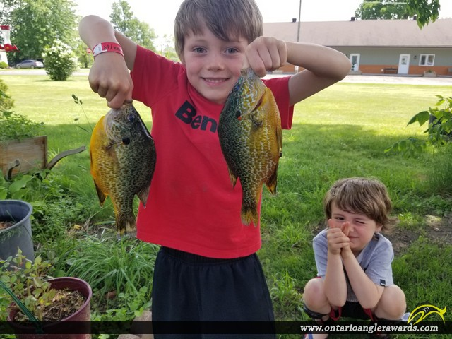 """9.5"""" Pumpkinseed caught on Lake St. Clair"""