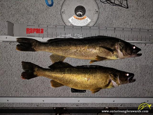 "26.25"" Walleye caught on Georgain Bay"
