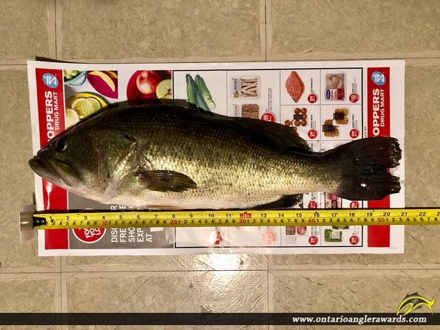 "20.75"" Largemouth Bass caught on Guelph Lake"