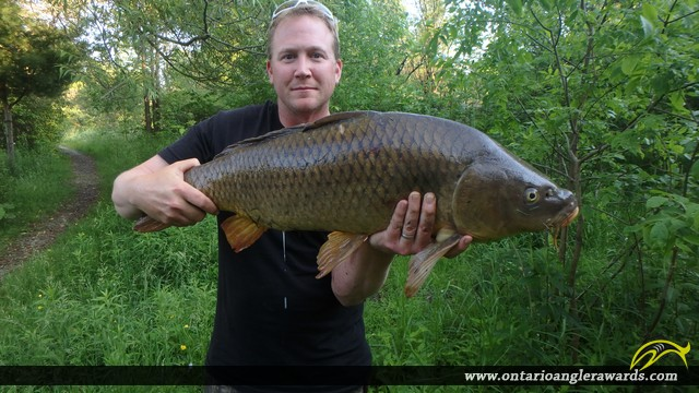 "32.00"" Carp caught on Cobourg Creek"
