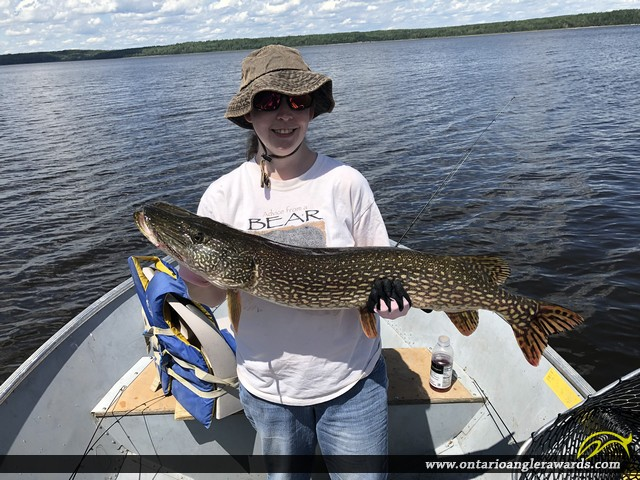 """40"""" Northern Pike caught on English River"""