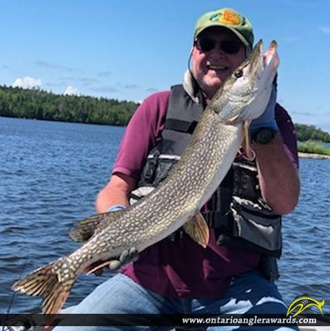 """36.25"""" Northern Pike caught on Lake of the Woods"""