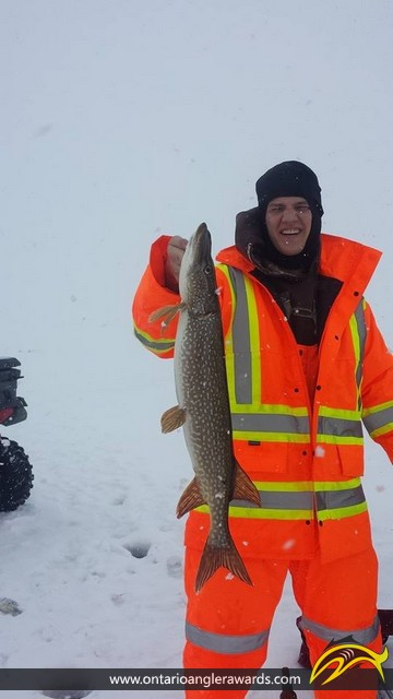 """32"""" Northern Pike caught on Rondeau Bay"""