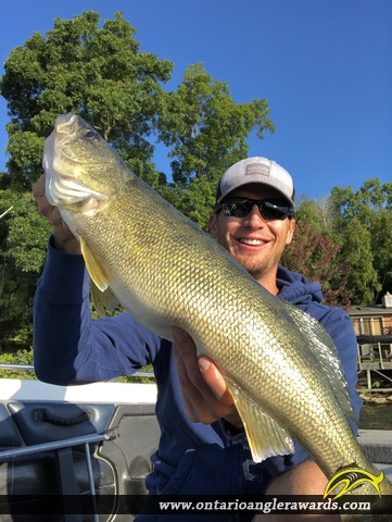 """29.00"""" Walleye caught on Bay of Quinte"""