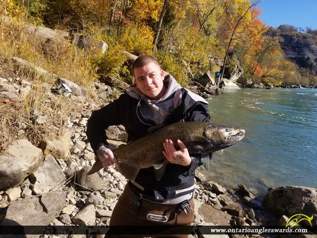 """37"""" Chinook Salmon caught on Niagara River"""