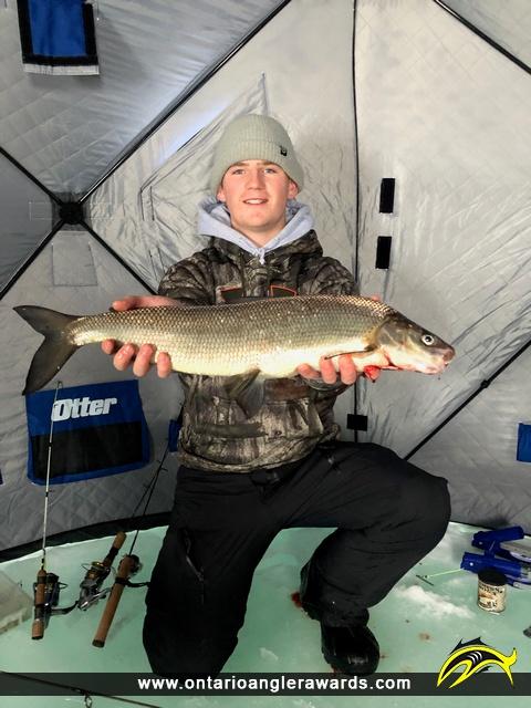 """24.75"""" Whitefish caught on Lake Simcoe"""