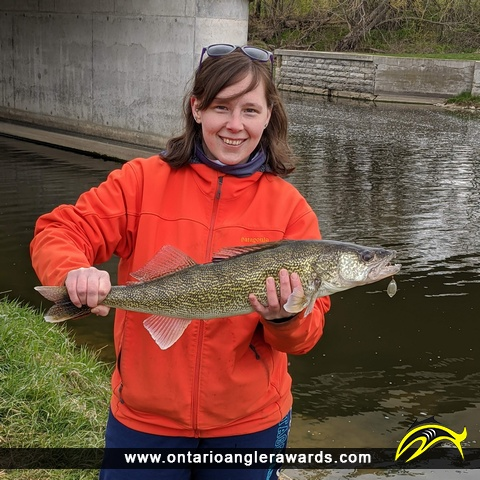 "26"" Walleye caught on Conestoga Lake"