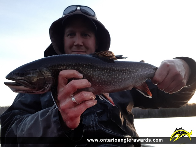 """19.05"""" Brook/Speckled Trout caught on Hum Lake"""