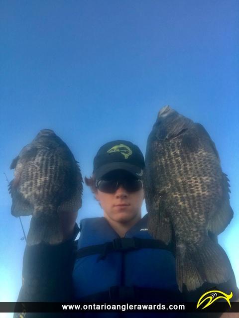 "11"" Rock Bass caught on Brandy Lake"