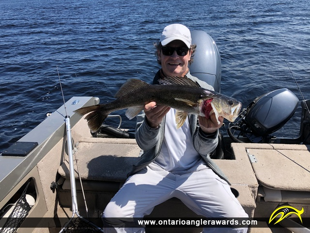"""27.5"""" Walleye caught on Lac Seul"""