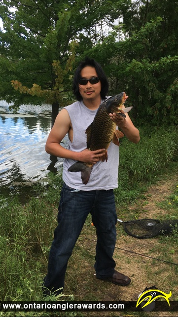 "30"" Carp caught on Berczy Park Pond"