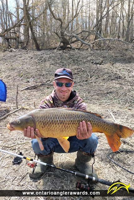 "30"" Carp caught on South Nation River"