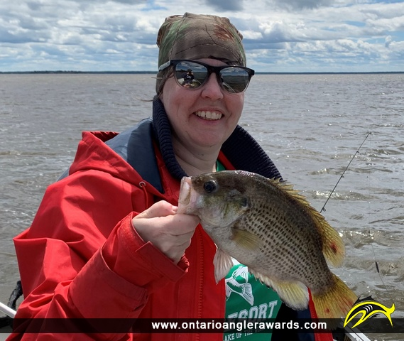 """10.25"""" Rock Bass caught on Lake of the Woods"""