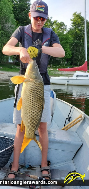 "30"" Carp caught on Conestogo Lake"