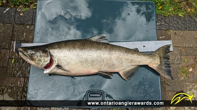"39.3"" Chinook Salmon caught on Wilmot Creek"