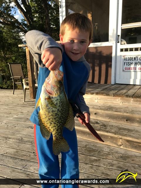 "11.5"" Black Crappie caught on Longbow Lake"