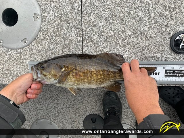 "17"" Smallmouth Bass caught on Lake of the Woods"