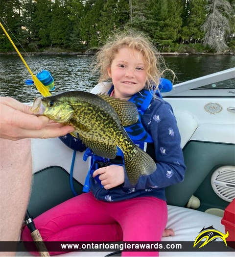 "11.5"" Black Crappie caught on Jack\'s Lake"