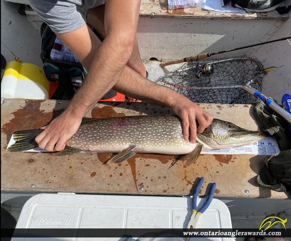"34.50"" Northern Pike caught on Mercutio Lake"