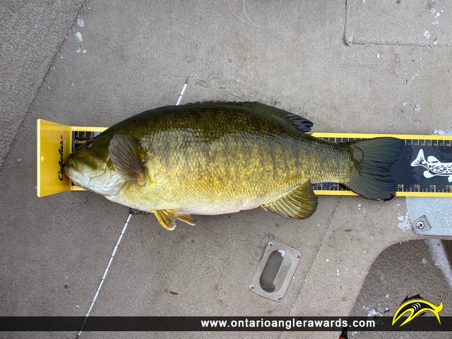 "20"" Smallmouth Bass caught on Lake Simcoe"