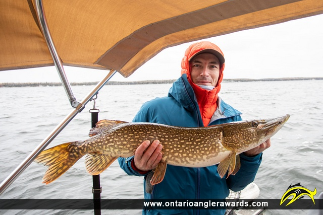 """36"""" Northern Pike caught on Whitefish Bay"""
