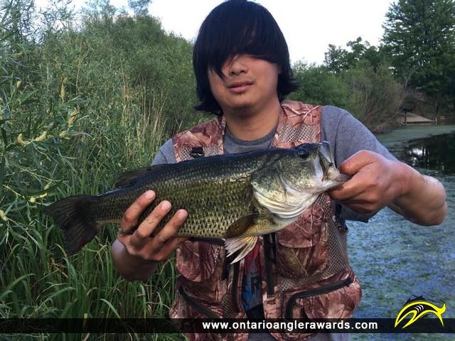 "18"" Largemouth Bass caught on Berczy Park Pond"