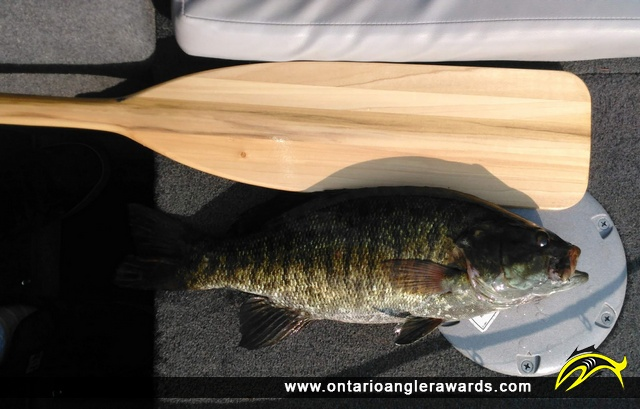 "23"" Smallmouth Bass caught on Iroquois Bay"