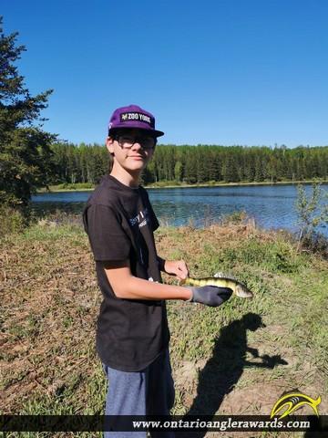 "12"" Yellow Perch caught on Gordon lake"