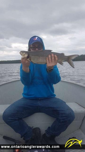 "24"" Whitefish caught on Goodfish Lake"
