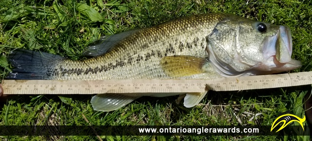 "18.5"" Largemouth Bass caught on Mill Pond"
