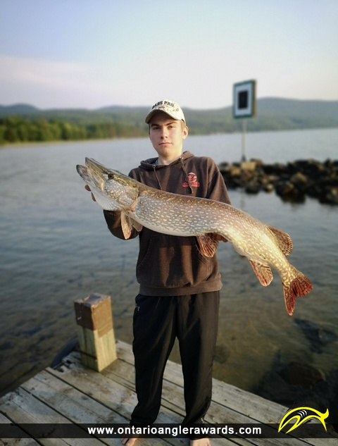 """41"""" Northern Pike caught on Lake Superior"""