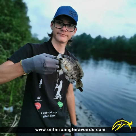 "11"" Rock Bass caught on Mattagami River"