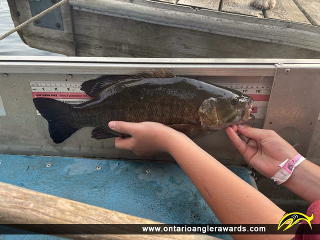 """17"""" Smallmouth Bass caught on Lake of the Woods"""