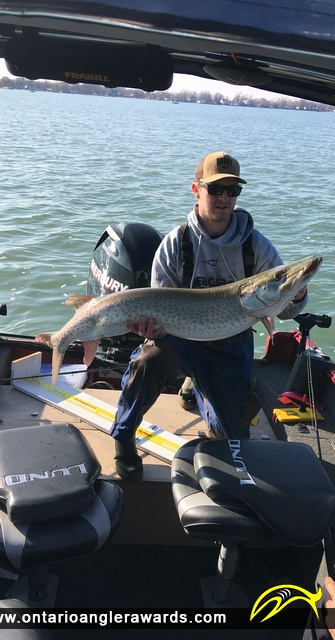 "48"" Muskie caught on Lake St. Clair"