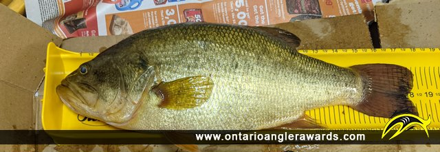 """18"""" Smallmouth Bass caught on Lake Muskoka"""