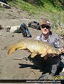 "37"" Carp caught on Nation River"