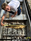 """33"""" Carp caught on Rideau Canal"""