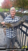 "36"" Chinook Salmon caught on Napanee River"