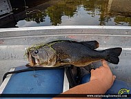 """20"""" Largemouth Bass caught on Lake Muskoka"""