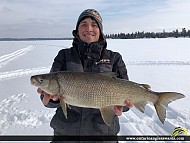 "23.5"" Whitefish caught on Shoal Lake"