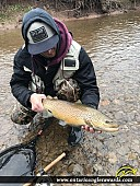 """23"""" Brown Trout caught on Bronte Creek"""