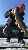 """30"""" Northern Pike caught on Trent River"""
