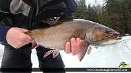 """19.00"""" Brook/Speckled Trout caught on Markoonis Lake"""