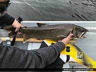 """29"""" Lake Trout caught on Muskrat Lake"""