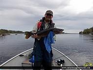 """26"""" Walleye caught on Metionga Lake"""
