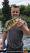 "14"" Yellow Perch caught on Lake of the Woods"