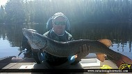 "48"" Muskie caught on Lake of the Woods"