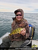 "13.5"" Yellow Perch caught on Lake Erie"