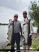 """34"""" Chinook Salmon caught on Lake Ontario"""
